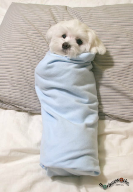 Blanket Burrito Dog
