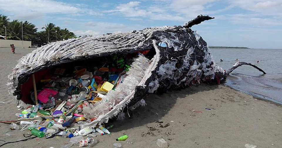 washed up whale plastic