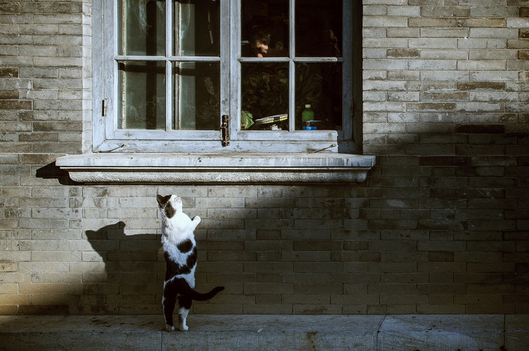 Why your cats should stay indoors