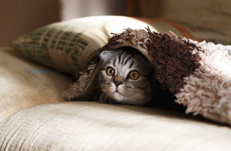 Your cat should stay indoors – new research suggests