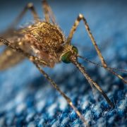 Dengue cases in the Philippines, now worse