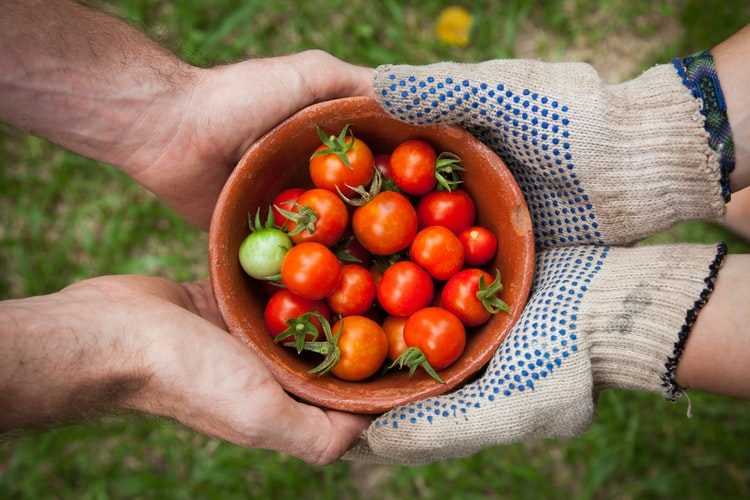 Starting your own vegetable garden, stay-at-home measure